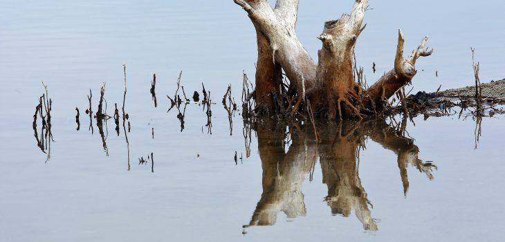 Reflection of a cut -down tree in Tasi -tolu lake. The Tasi-tolu lake includes three permanent shallow saline lakes and a hinterland dominated by Eucalyptus savanna. Tasi-tolu is one of the most important wetlands in Timor-Leste. Photo by Martine Perret/UNMIT UNMIT Photo/Martine Perret