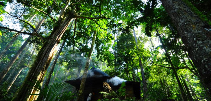 United Nations Forum on Forests Photo Competition  1 of 6 winning photos  Image title: Pahmung krui damar forest  Info:  taken in the Damar Forests of Indonesia.